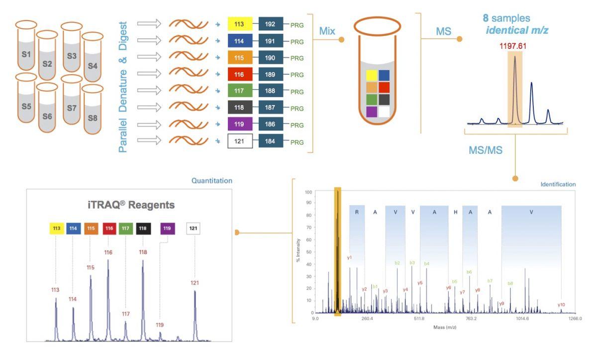科学小实验力的平衡步骤全图